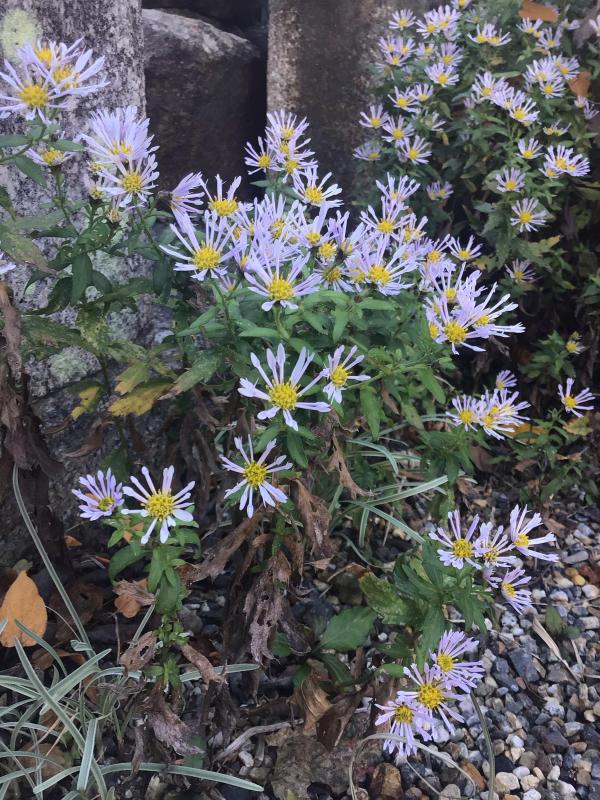 色とりどりの花に囲まれたい訳ではないのだけど・・・_c0404712_10503202.jpg