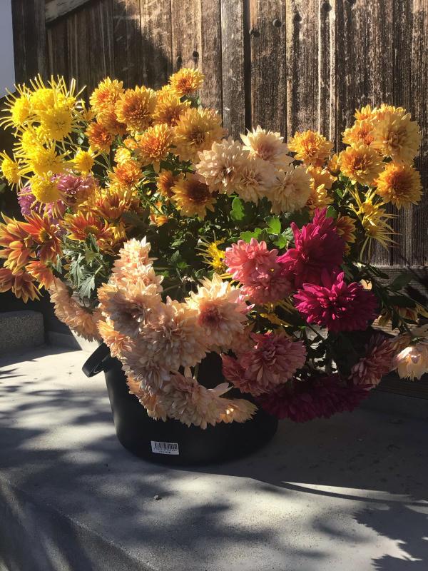 色とりどりの花に囲まれたい訳ではないのだけど・・・_c0404712_10503588.jpg