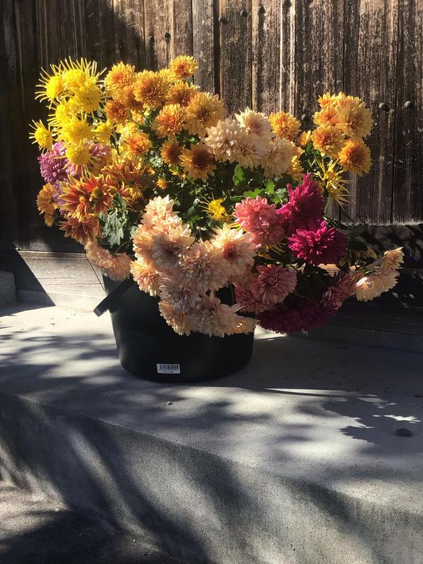 色とりどりの花に囲まれたい訳ではないのだけど・・・_c0404712_10503627.jpg