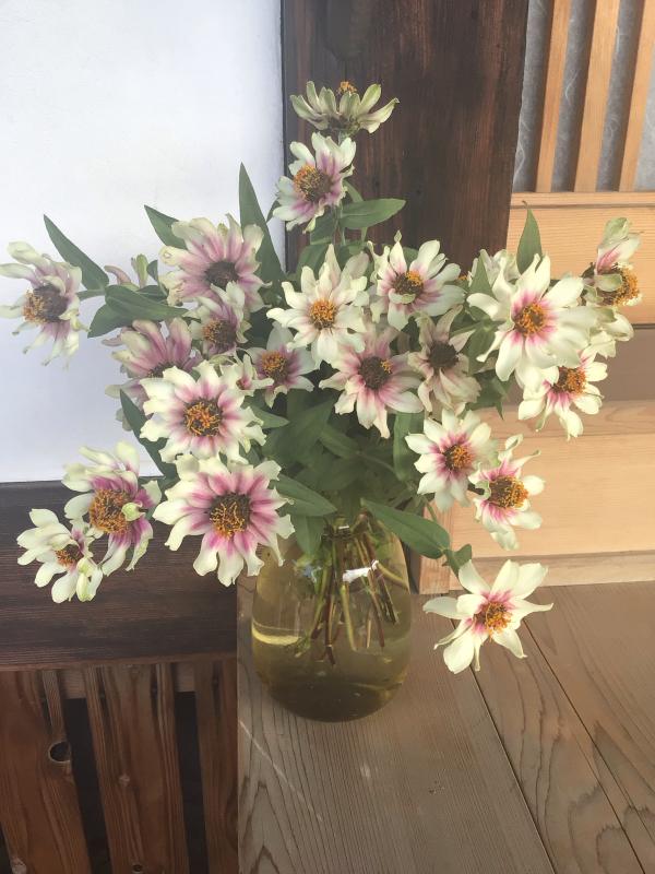 色とりどりの花に囲まれたい訳ではないのだけど・・・_c0404712_10523403.jpg