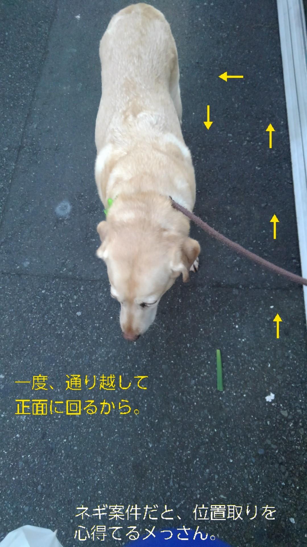高円寺の落ちネギ・82、83(筒×2)_b0339522_12442617.jpg
