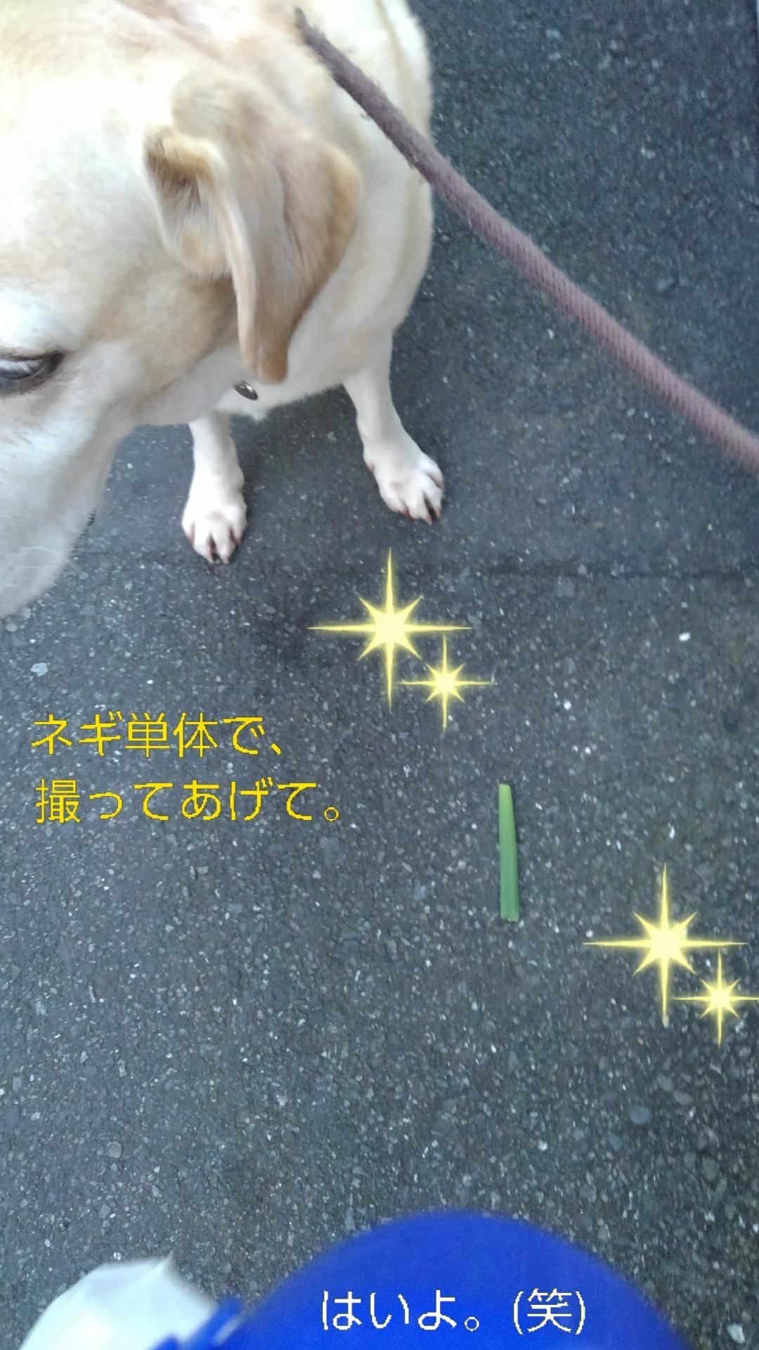高円寺の落ちネギ・82、83(筒×2)_b0339522_13030838.jpg