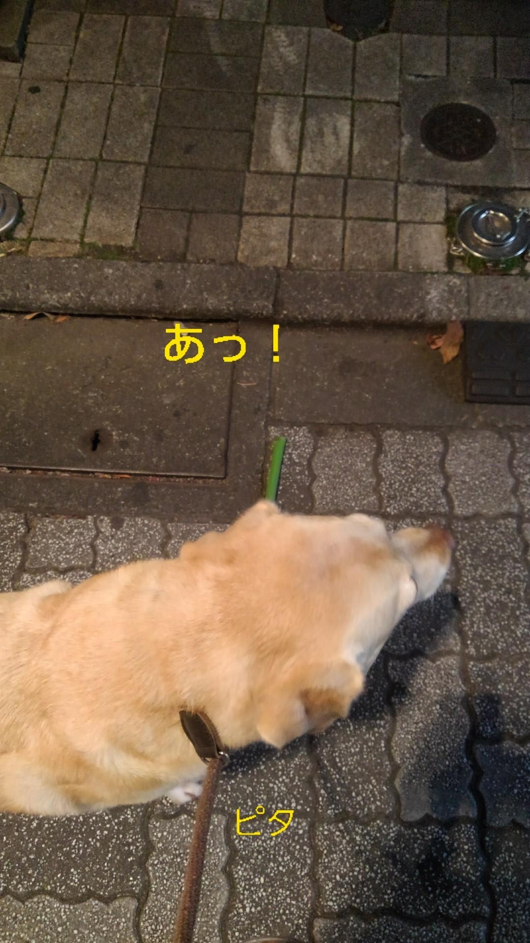 高円寺の落ちネギ・82、83(筒×2)_b0339522_13043460.jpg