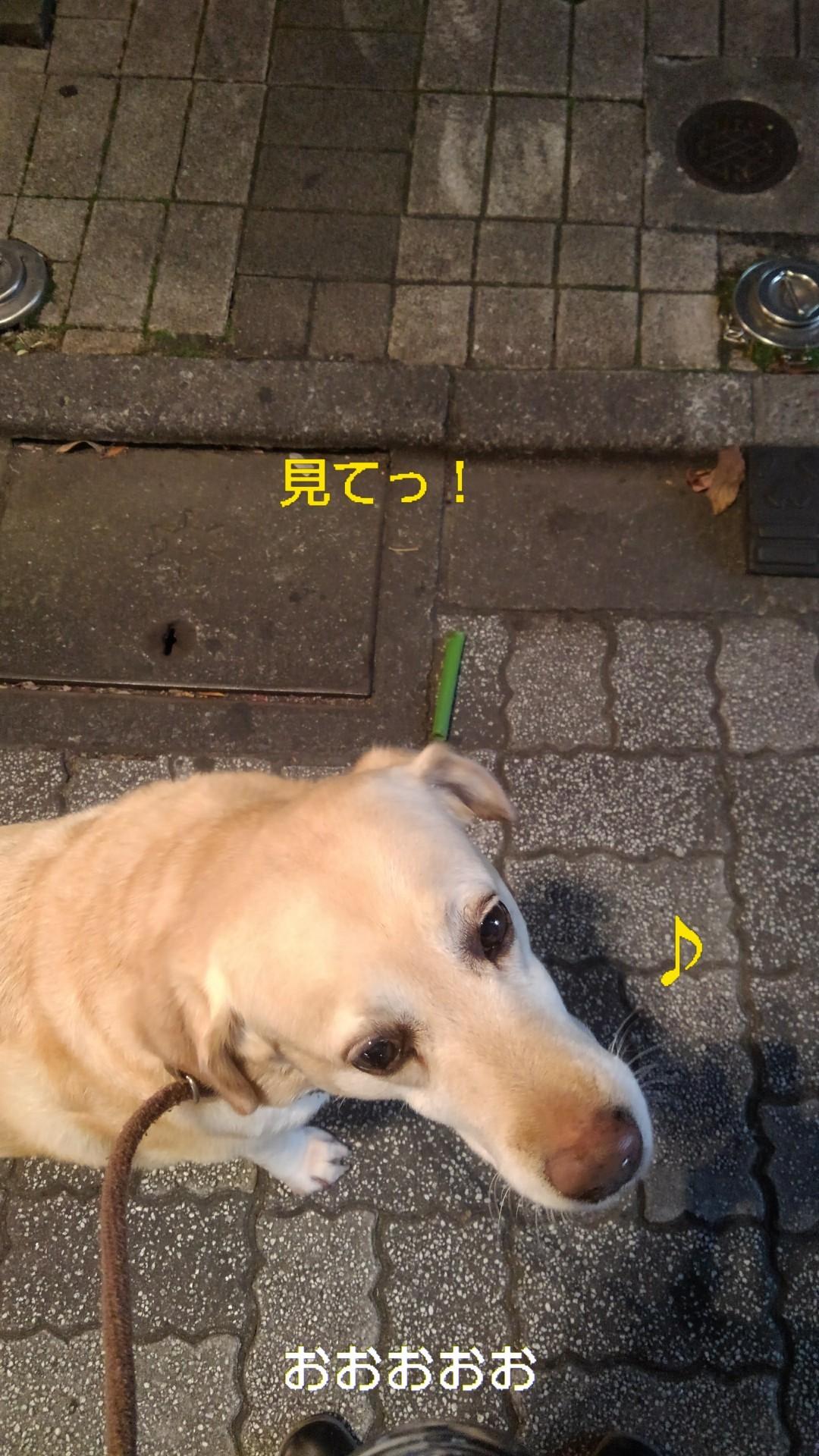高円寺の落ちネギ・82、83(筒×2)_b0339522_13064974.jpg