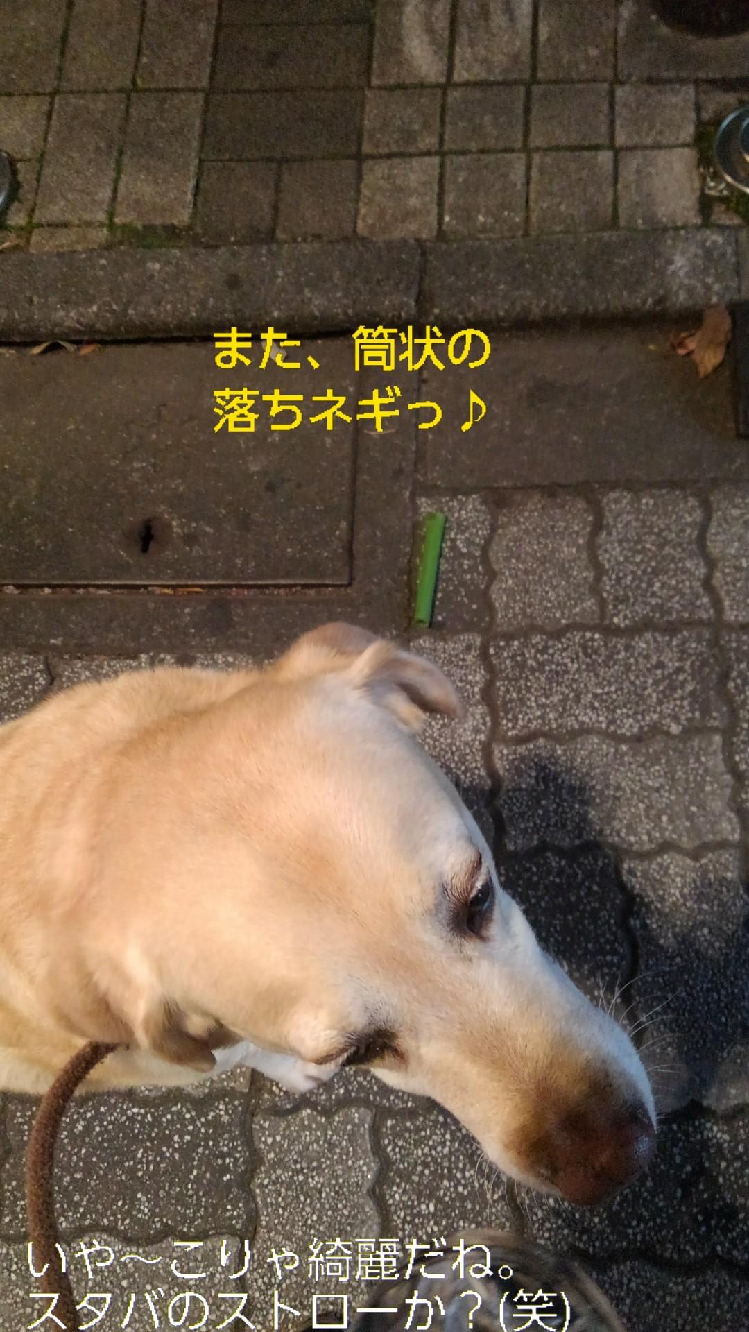 高円寺の落ちネギ・82、83(筒×2)_b0339522_13071486.jpg