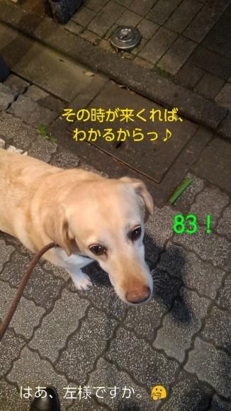 高円寺の落ちネギ・82、83(筒×2)_b0339522_13102733.jpg