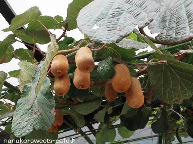 柿の実_d0147030_17065602.jpg