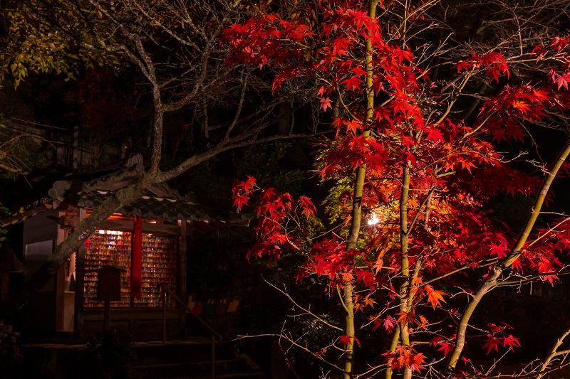 2020紅葉きらめく京都 正壽院ライトアップ_f0155048_23561916.jpg