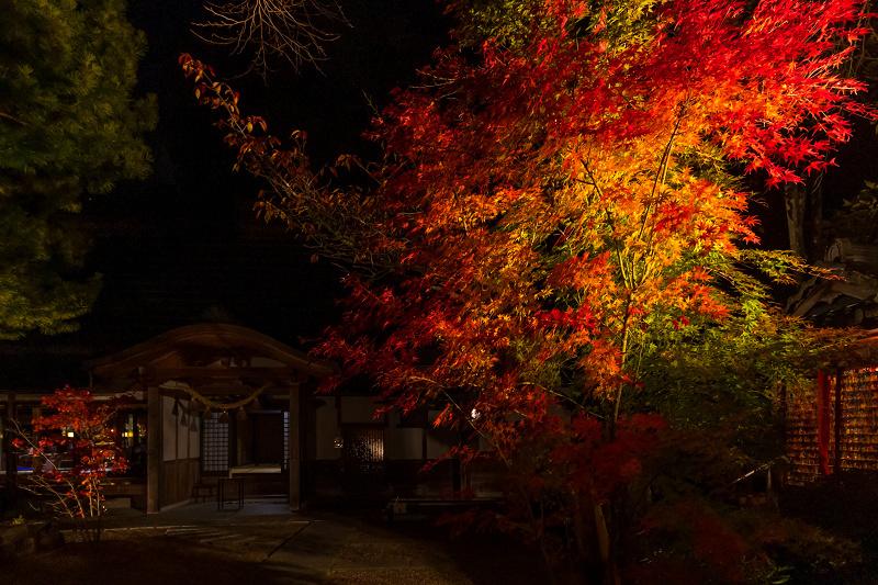 2020紅葉きらめく京都 正壽院ライトアップ_f0155048_23570963.jpg