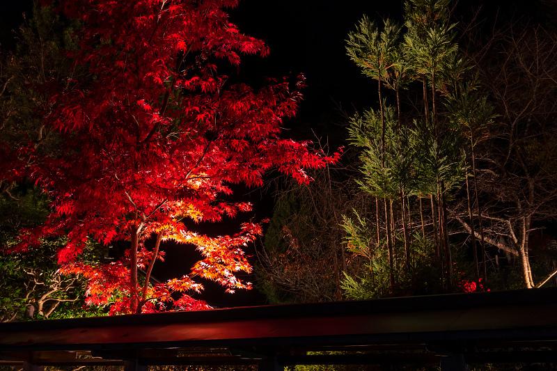 2020紅葉きらめく京都 正壽院ライトアップ_f0155048_23573101.jpg