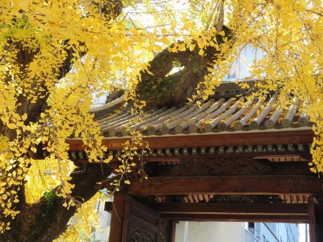 窓辺の紅葉を楽しむ_f0329849_23062411.jpg