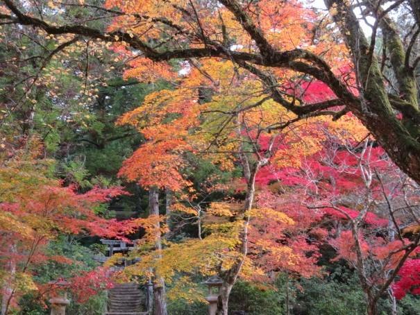 窓辺の紅葉を楽しむ_f0329849_23474974.jpg