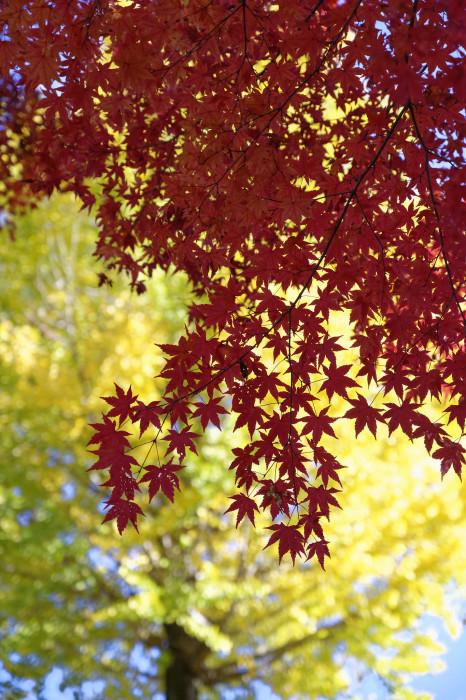 秋色の境内_e0321360_23335913.jpg