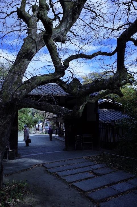 旧白洲邸「武相荘」_f0134963_00161796.jpeg