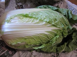 白菜_b0162372_19081040.jpg