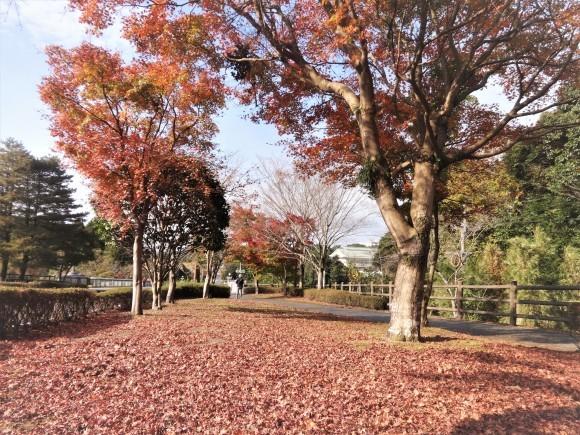 霧島錦江湾国立公園_e0352610_17352997.jpg