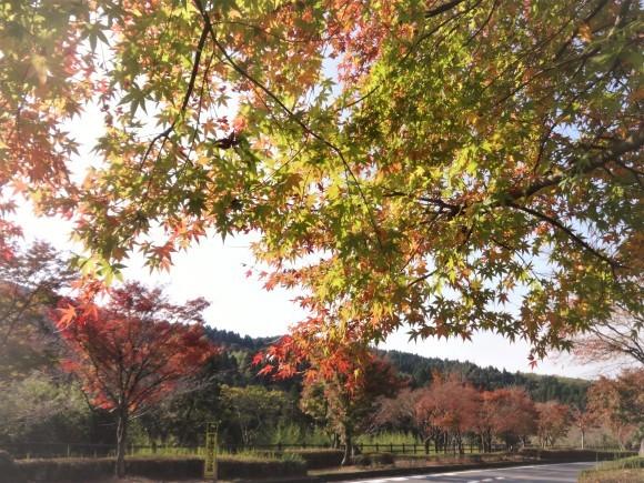 霧島錦江湾国立公園_e0352610_17383314.jpg