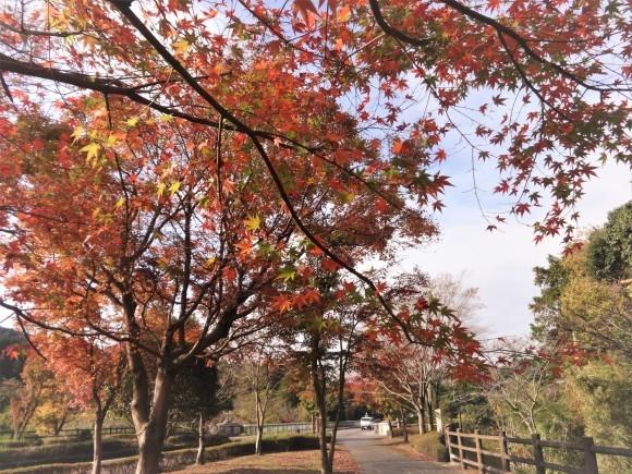 霧島錦江湾国立公園_e0352610_17480425.jpg