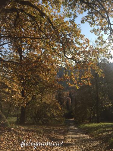 美しいボローニャの丘_b0338818_17313621.jpeg