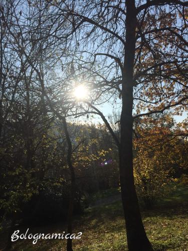 美しいボローニャの丘_b0338818_17342448.jpeg