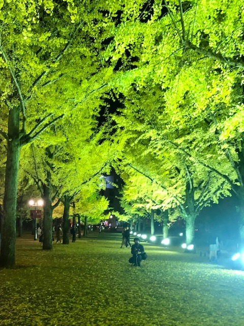 県庁の銀杏並木_e0184224_10145881.jpg