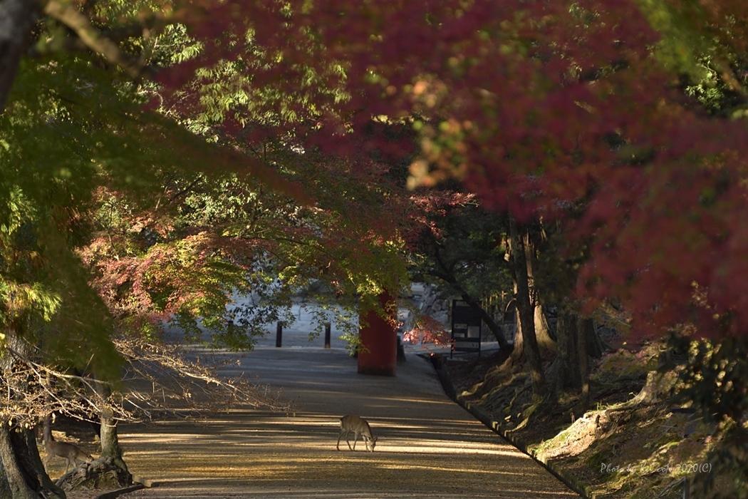奈良の秋 @ 手向山八幡宮_a0212036_05290500.jpg