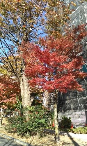 街角の紅葉。_c0017651_10141288.jpg