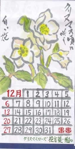 古川 2020年12月 クリスマスローズ_b0124466_20490309.jpg