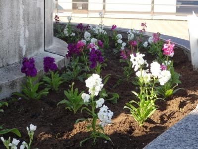 名古屋港水族館前花壇の植栽R2.11.11_d0338682_16460495.jpg
