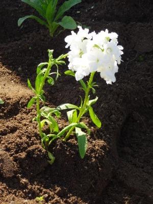 名古屋港水族館前花壇の植栽R2.11.11_d0338682_16494935.jpg