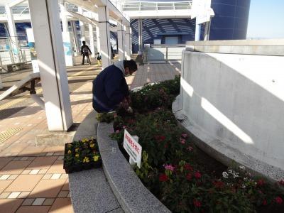 名古屋港水族館前花壇の植栽R2.11.11_d0338682_16505920.jpg