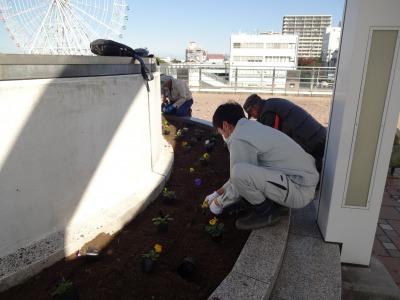 名古屋港水族館前花壇の植栽R2.11.11_d0338682_16510951.jpg