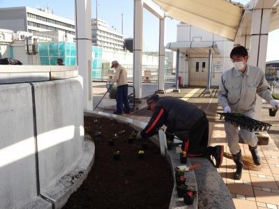 名古屋港水族館前花壇の植栽R2.11.11_d0338682_16513243.jpg
