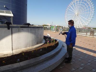 名古屋港水族館前花壇の植栽R2.11.11_d0338682_16514970.jpg