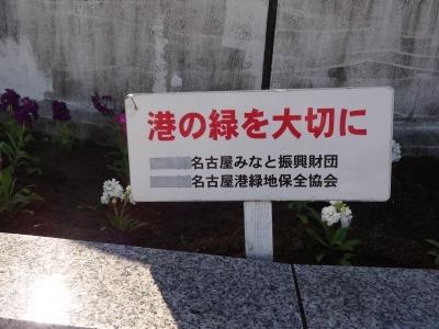 名古屋港水族館前花壇の植栽R2.11.11_d0338682_16521421.jpg
