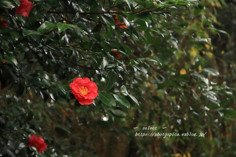 冬の花_e0364398_21341547.jpg