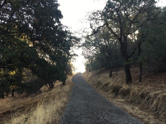 丘歩きでコヨーテに遭遇_b0366211_04495874.jpeg