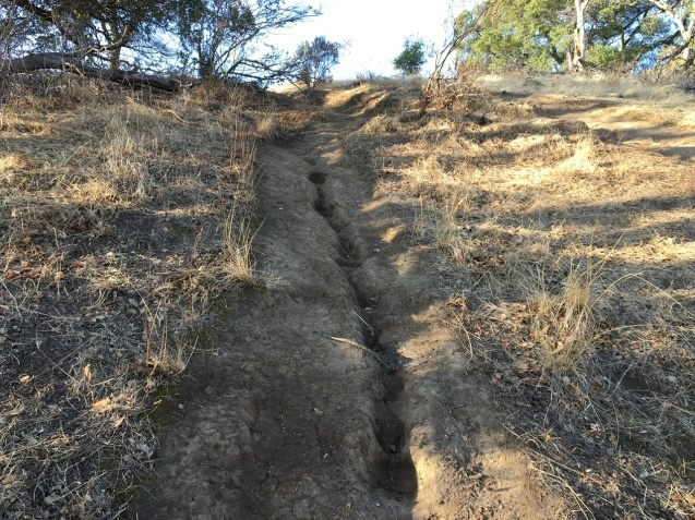 丘歩きでコヨーテに遭遇_b0366211_04503303.jpeg