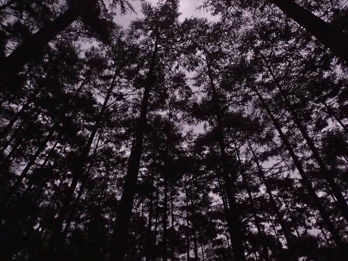 裏山溯行記_c0110112_22020910.jpg
