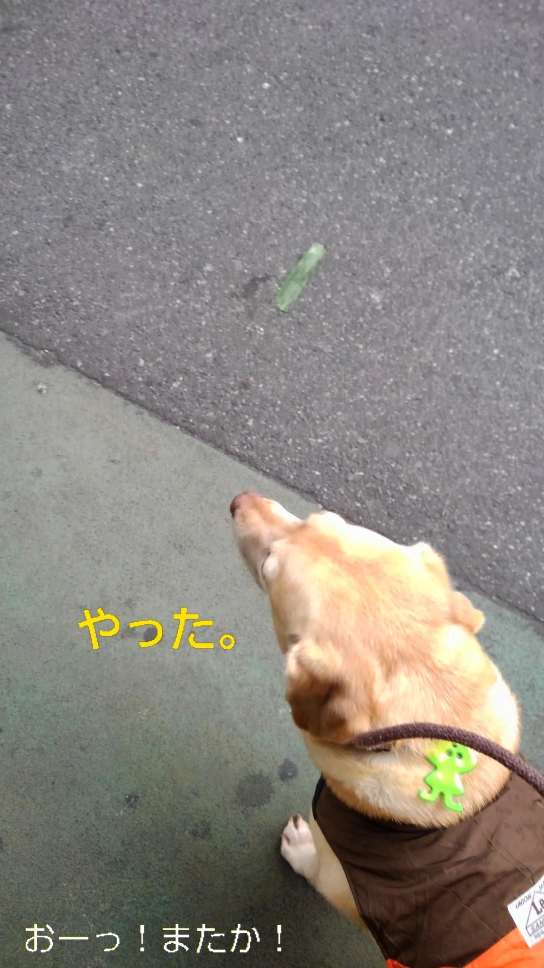 高円寺の落ちネギ・84(さらに)_b0339522_10240525.jpg