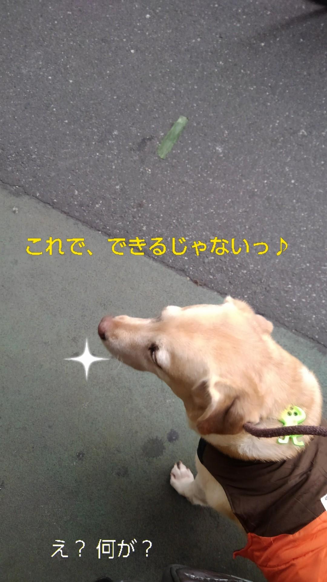 高円寺の落ちネギ・84(さらに)_b0339522_10245011.jpg