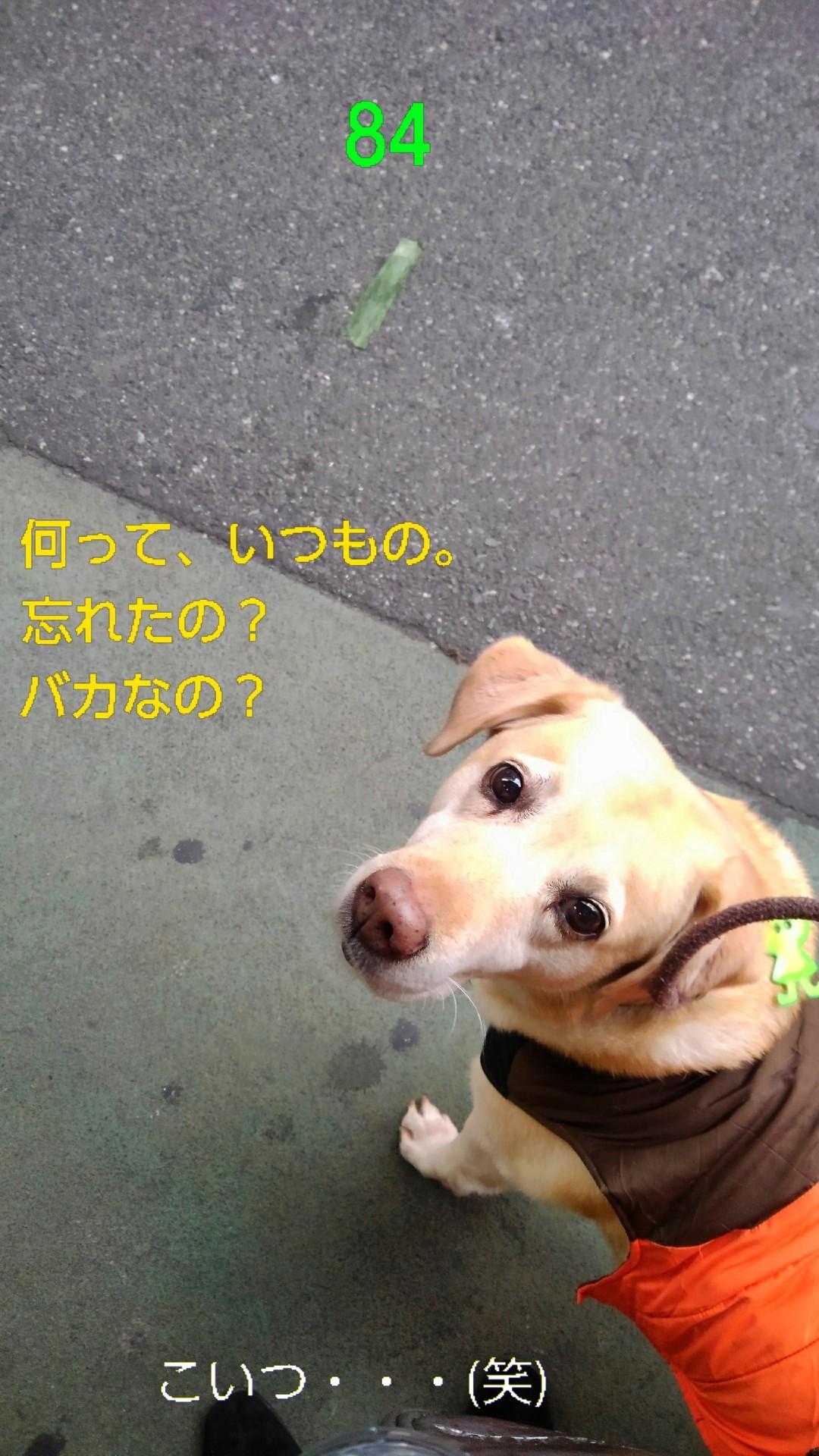 高円寺の落ちネギ・84(さらに)_b0339522_10252699.jpg
