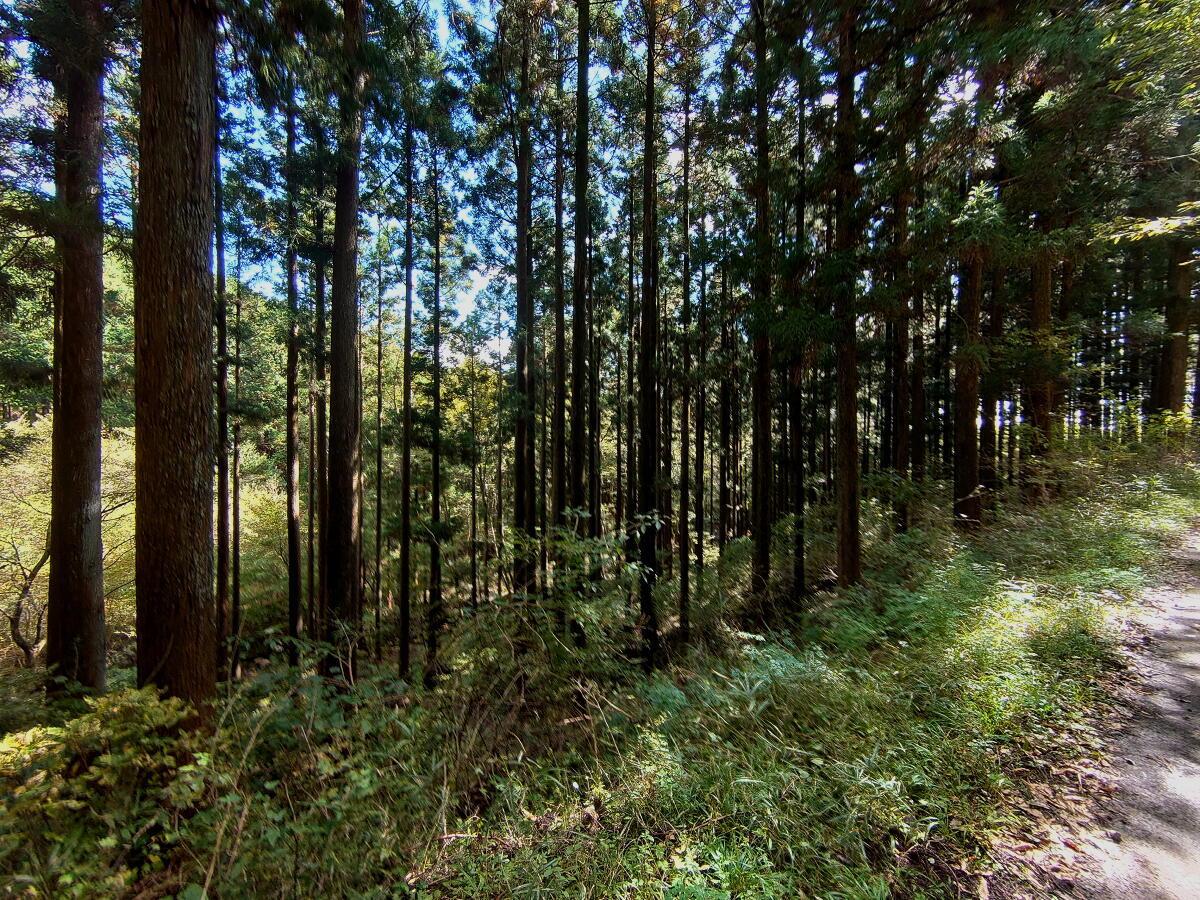 渋滞の日光を避けて栃木県民の森へ_d0137627_21471390.jpg