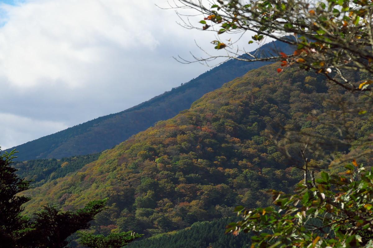渋滞の日光を避けて栃木県民の森へ_d0137627_22482684.jpg