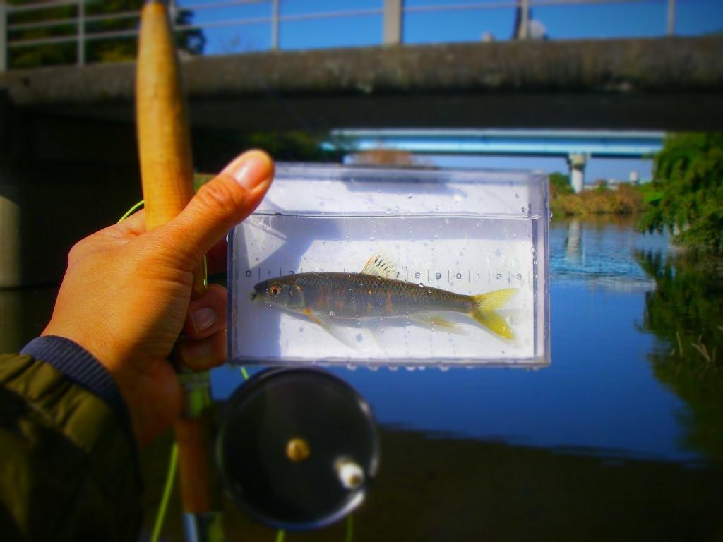 すっかり忘れてた釣行の更新_a0130057_00123767.jpg