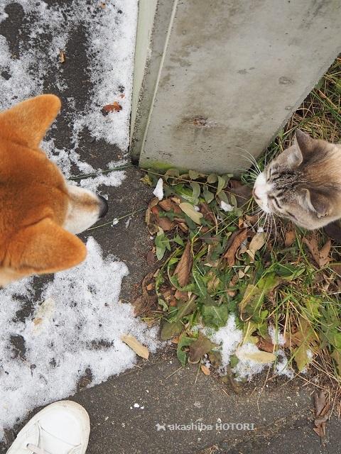 番猫 カーヴィさん_f0150377_17490438.jpg