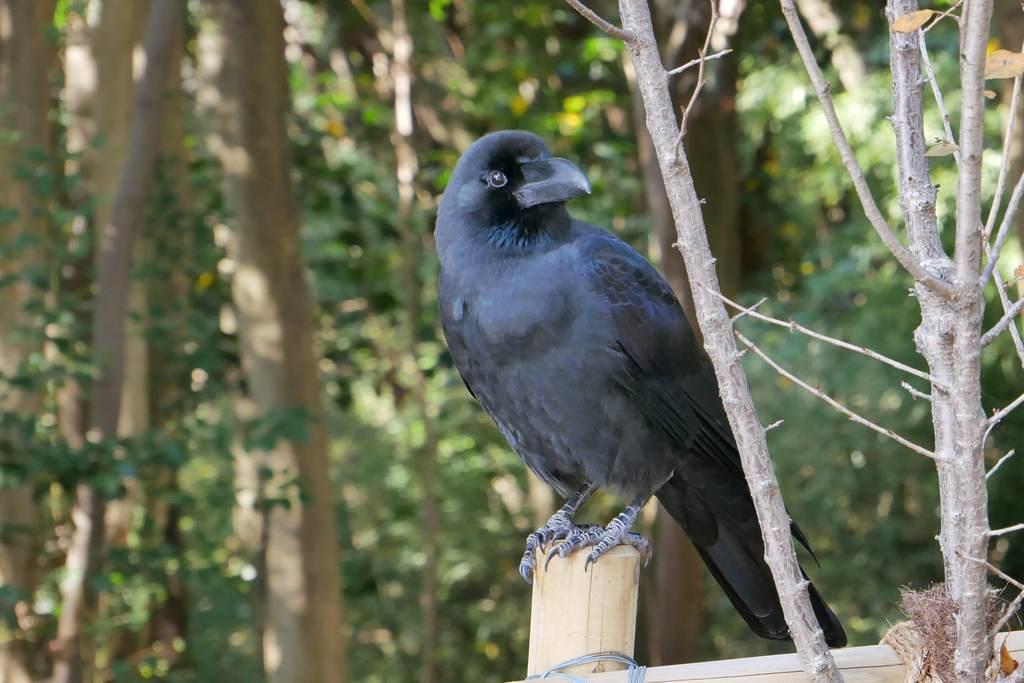 明石公園 2020.11.26 鳩達とは会えない_b0174191_23120838.jpg