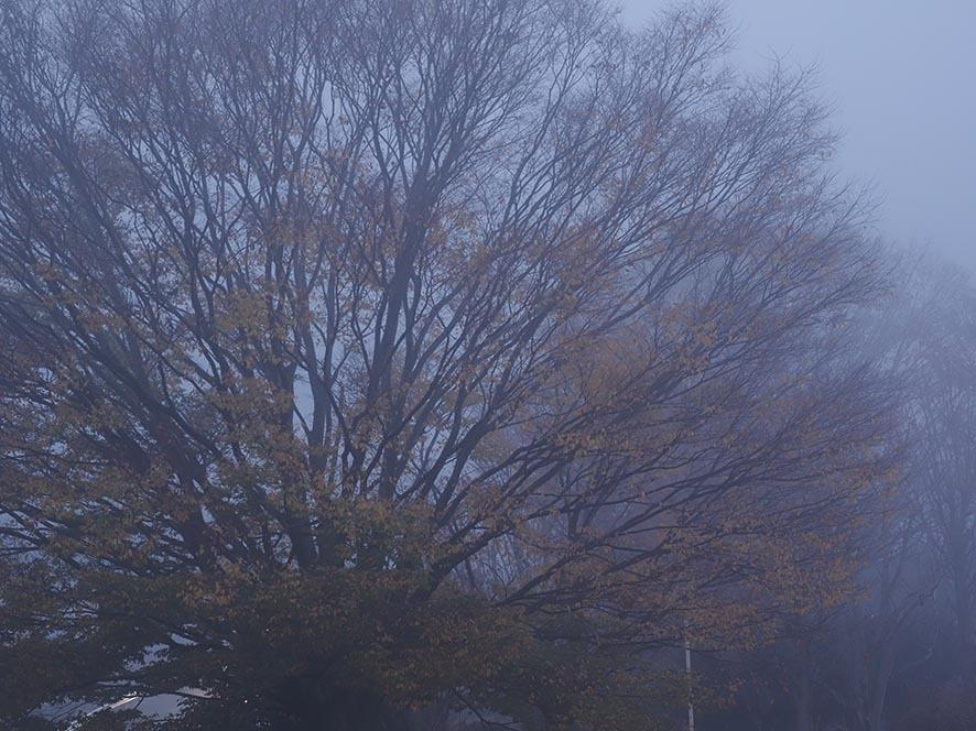 こんな日もあるさ、深すぎる霧_f0224100_22174046.jpg