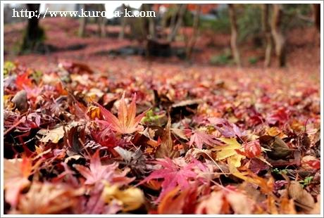 秋から冬へと・・・なんだかんだ今年もあと一ヶ月になりますね!_c0322812_18120241.jpg