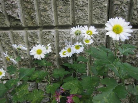 庭仕事と石焼風ビビンバです。_a0174419_13542490.jpg